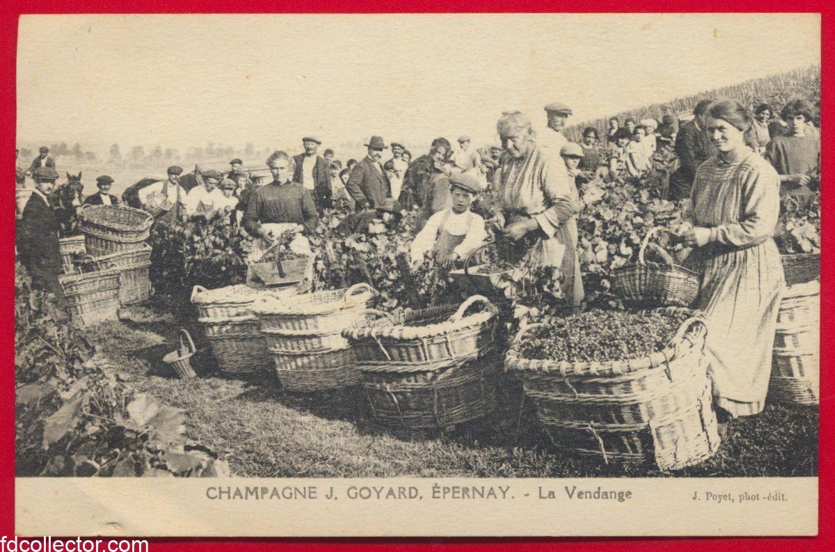 cpa-champagne-j-goyard-epernay-la-vendange