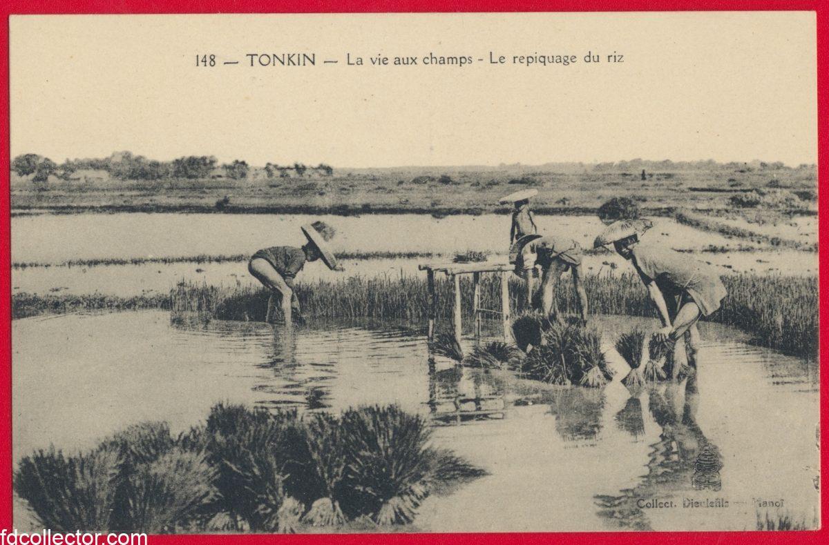 cpa-tonkin-vie-champs-repiquage-riz