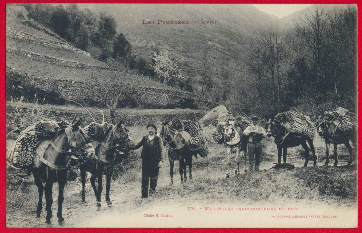 cpa-muletiers-transporteurs-bois-pyrenees