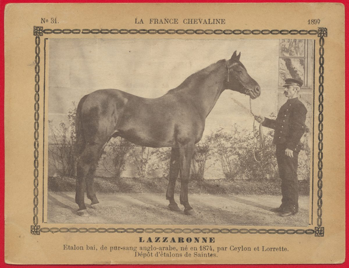 carte-photo-france-chevaline-lazzaronne-etalon-anglo-arabe