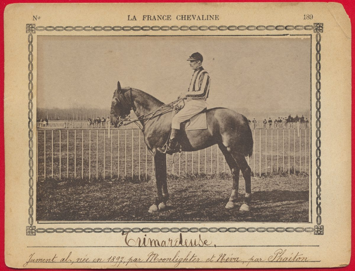 carte-photo-france-chevaline-trimardeuse-jument-moonlighter-neva-phaeton